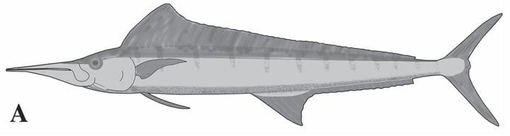 aglyptorhynchus
