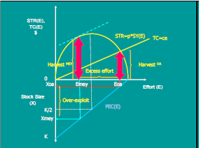 gordon-schaeffer-curve-2