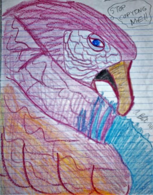 Annoyed Macaw