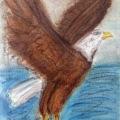Bald Eagle in Flight (Pastel Version) –11×14